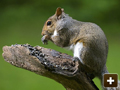 Squirrel control across Oxfordshire and the Thames Valley