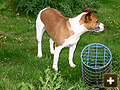 Using bolt traps and dog for rabbit control