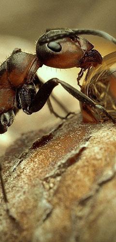 ant control