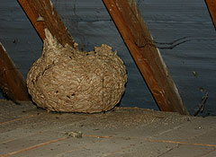 wasp nest removal nad pest control for wasps